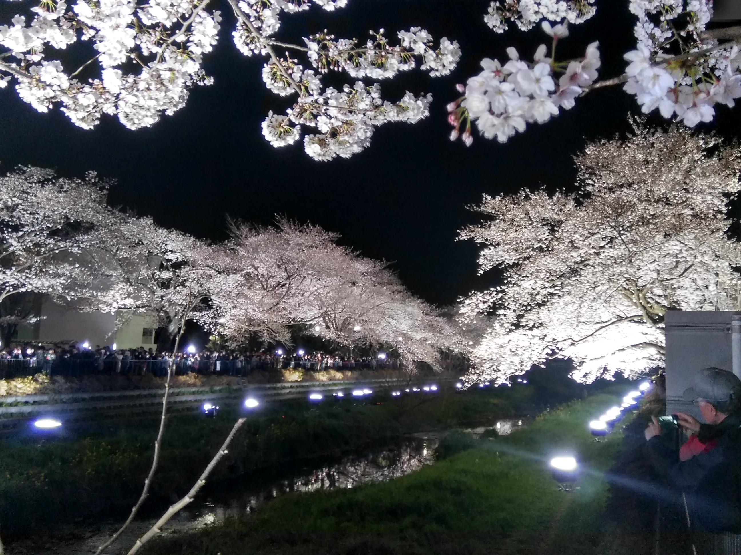 やはり川に映る桜がキレイでした